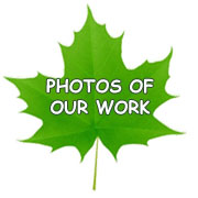 Photos of our work leaf
