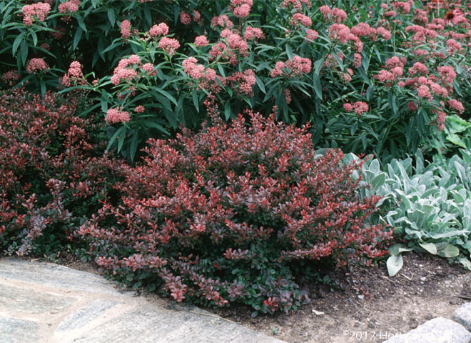 Shrubs dooley landscape designs albuquerque for Plants and bushes for landscaping